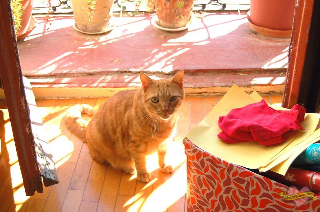 gato en casa antigua vintage Alicante
